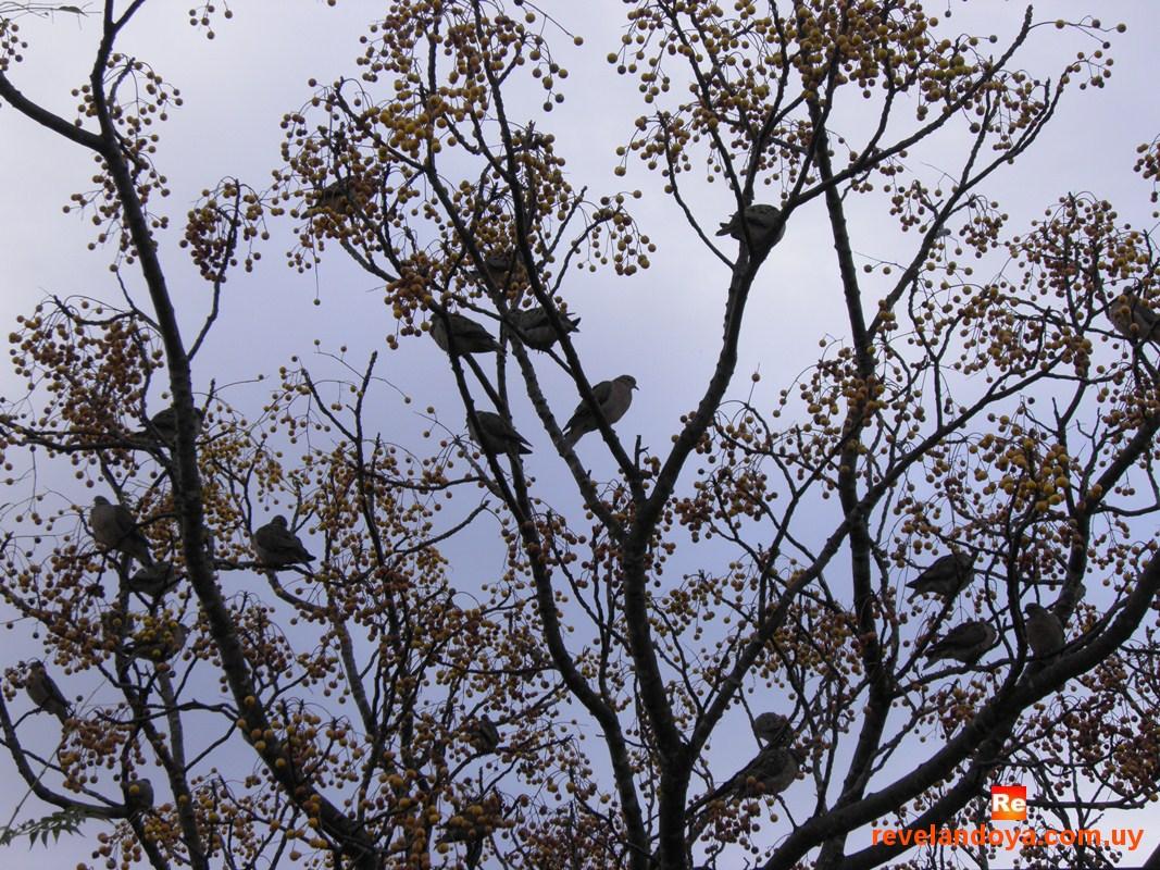 Pájaros en Artigas